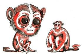 Monkey-Head-Transplant